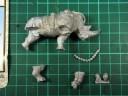 Carnevale - Rhino