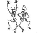 var_skelette
