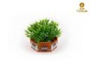 Zen_Terrain_modular_planters_6