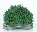Zen_Terrain_modular_planters_8