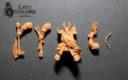 LKM_Lost_Kingdom_Miniatures_Chaoszwerge_indiegogo_3D_Prints_12