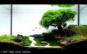 Adventskalender_Aquarium_11