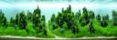 Adventskalender_Aquarium_4