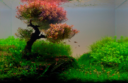 Adventskalender_Aquarium_1
