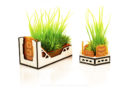 Gingermane Planters 2