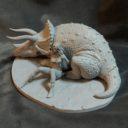 Mirico Shanara Triceratopr Prev02