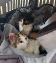 Katzen Neuzugänge