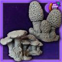 BadSquiddo MushroomMorelCluster 01