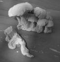BadSquiddo MushroomMorelCluster 04