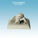 Spellcrow ForestSpider 01